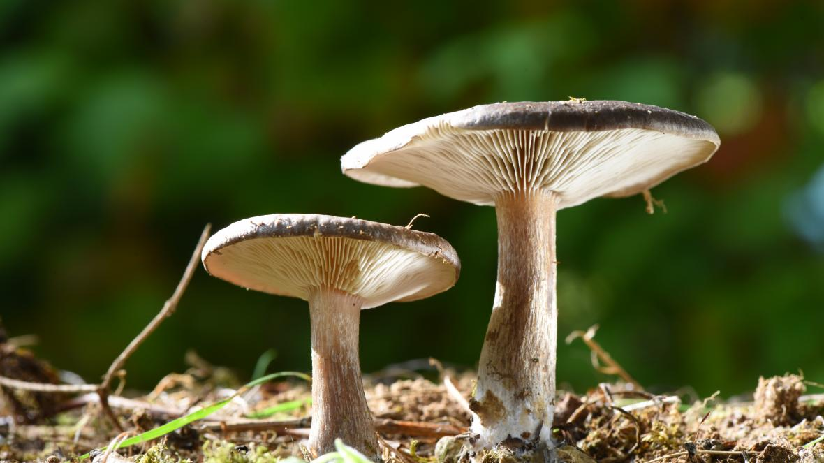 Magic Mushrooms and Cancer Patients